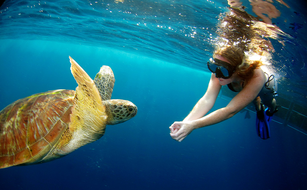 Snorkeling with a turtle at the Similan Islands