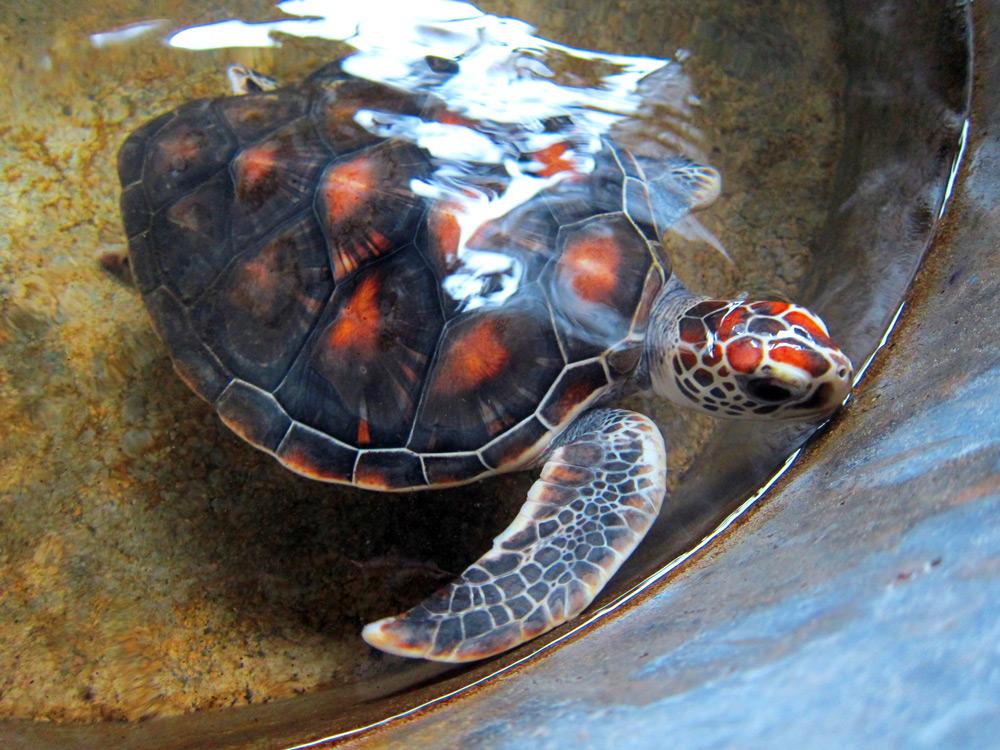 Phang Nga Coastal Fisheries and turtle sanctuary