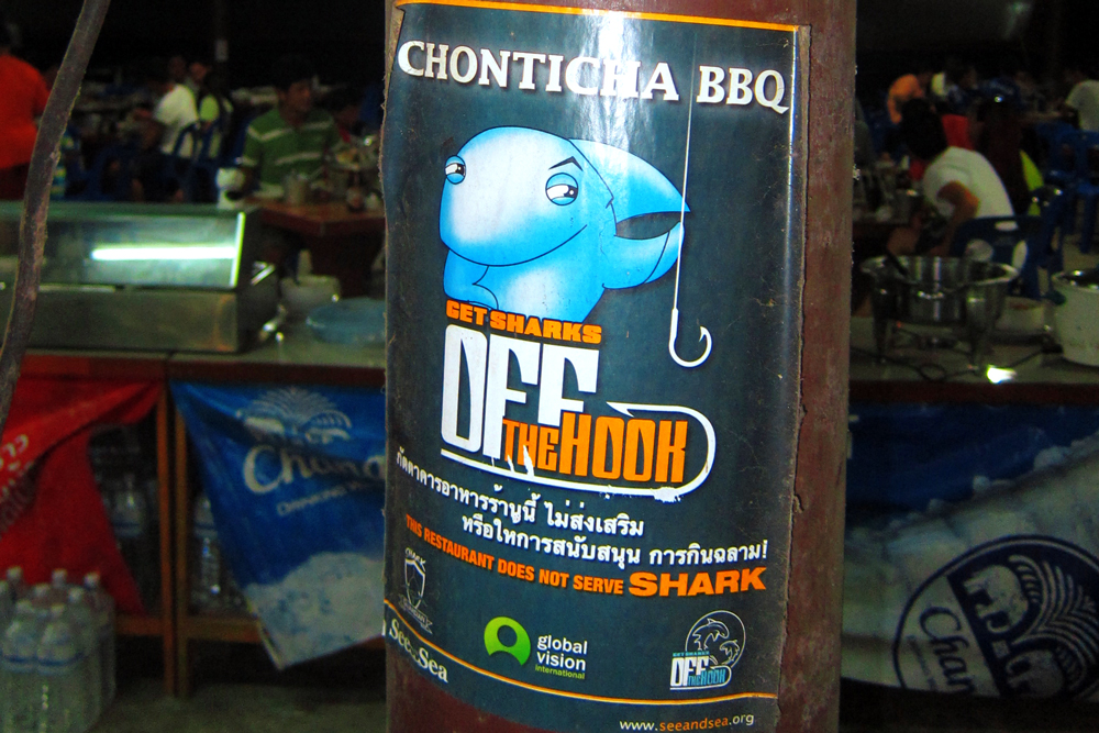 Chonticha 2 want to Get Sharks Off the Hook, Shark conservation Thailand