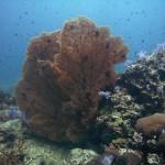 Thailand dive site Anemone Reef near Phuket Thailand