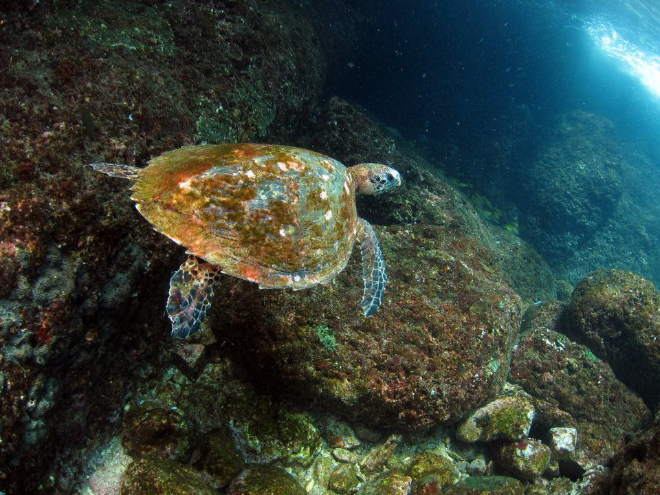 Turtle near Koh Phi Phi Thailand