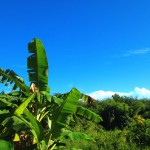 blue skies and banana palms Khao Lak Thailand