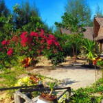 Beautiful gardens at Prathong Nature Resort, Koh Prathong Thailand