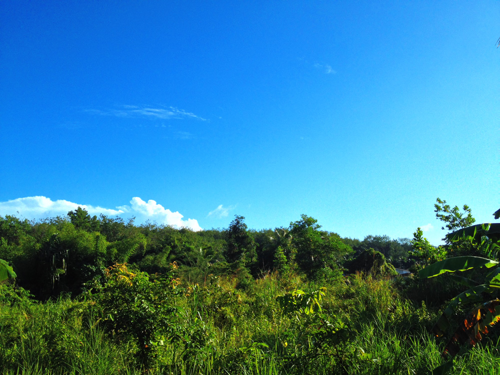 Blue skies and jungle Khao Lak Thailand